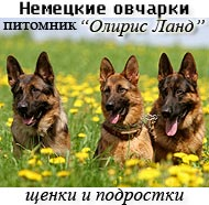 питомник немецких овчарок предлагает щенков