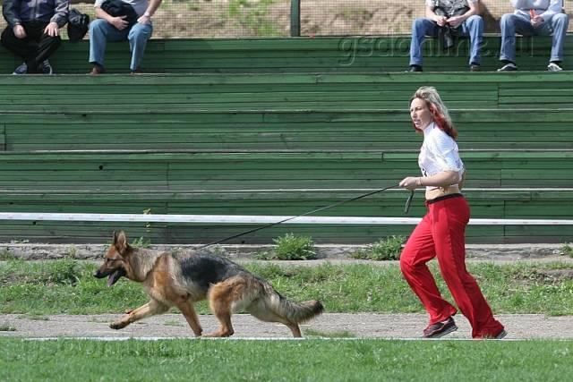 немецкая овчарка фото IMG_5907 IMG_5907