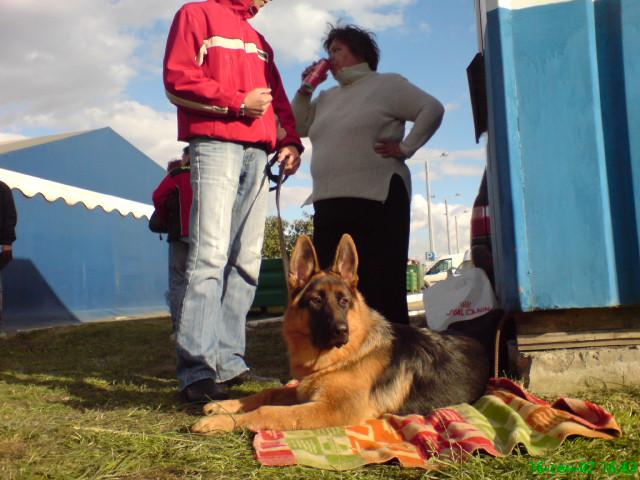 немецкая овчарка фото BESTa_160907_16-43_ BESTa_160907_16-43_