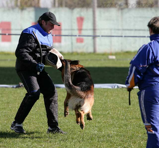 немецкая овчарка фото IMG_0315 IMG_0315