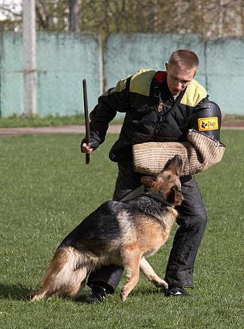 немецкая овчарка фото Банхориот Рокси IMG_1205