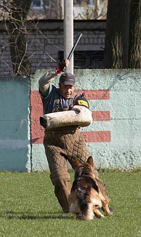 немецкая овчарка фото Дуси с Верхних Полей IMG_1231