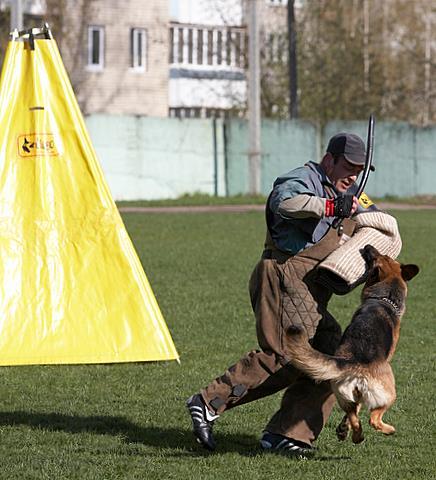 немецкая овчарка IMG_1239 IMG_1239