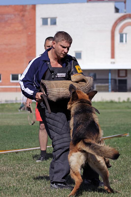 немецкая овчарка фото № 133 IMG_0283 IMG_0283