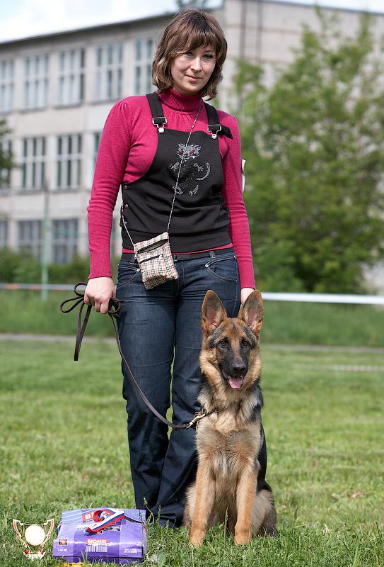 немецкая овчарка IMG_2904_800 IMG_2904_800