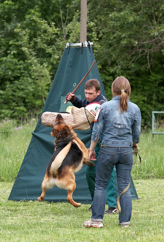 немецкая овчарка фото IMG_3159_800 IMG_3159_800