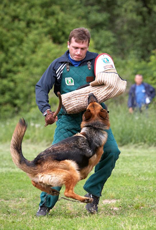 немецкая овчарка фото IMG_3255_800 IMG_3255_800