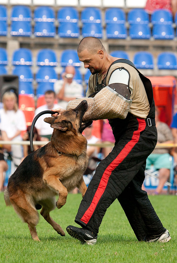 немецкая овчарка фото ЛИСВЕГЕН РИЧАРД IMG_4060_900 IMG_4060_900