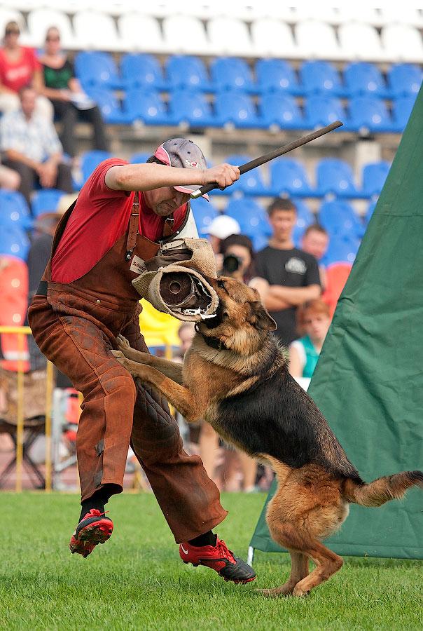 немецкая овчарка фото CLEA ZUR MEDBACHER MUHLE IMG_4082_900 IMG_4082_900
