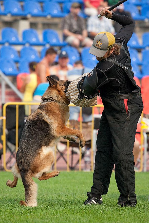 немецкая овчарка фото DEMETRA V. LILU LAND IMG_4095_900 IMG_4095_900
