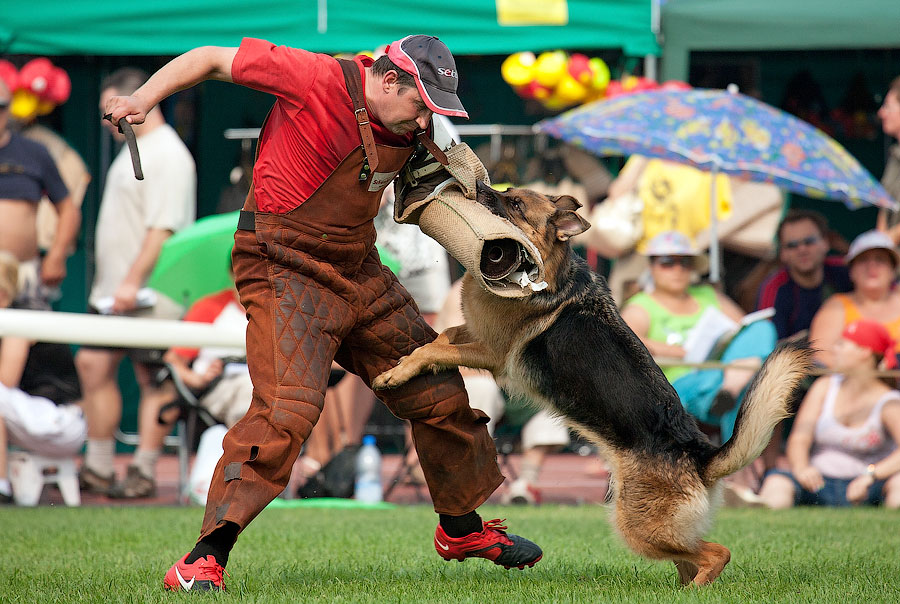 немецкая овчарка фото АГРЕССИЯ ФБР IMG_4212_900 IMG_4212_900
