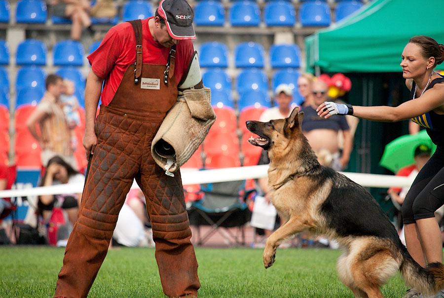 немецкая овчарка фото IMG_4217_900 IMG_4217_900