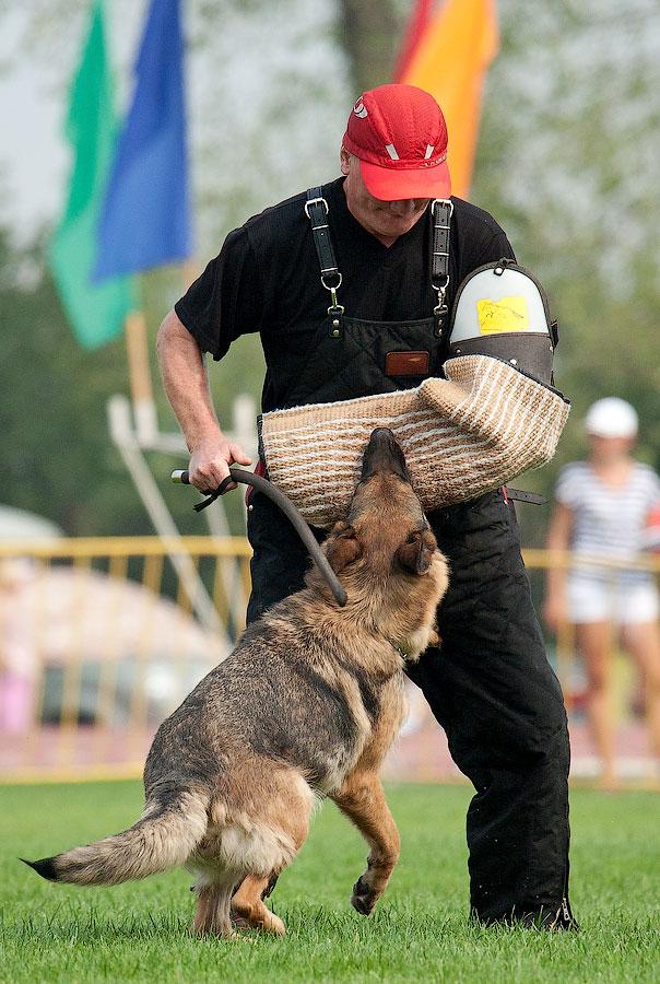 немецкая овчарка фото АУРУМ АГЛИС ЛАУРА IMG_4265_900 IMG_4265_900