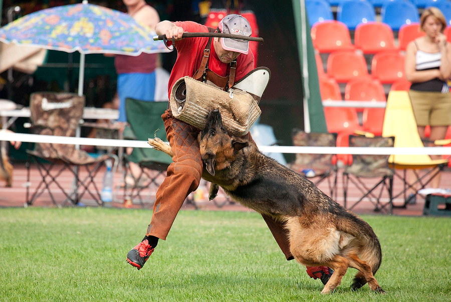 немецкая овчарка фото СТИКС ФОН РОТЕН БЛИТЦ IMG_4384_900 IMG_4384_900