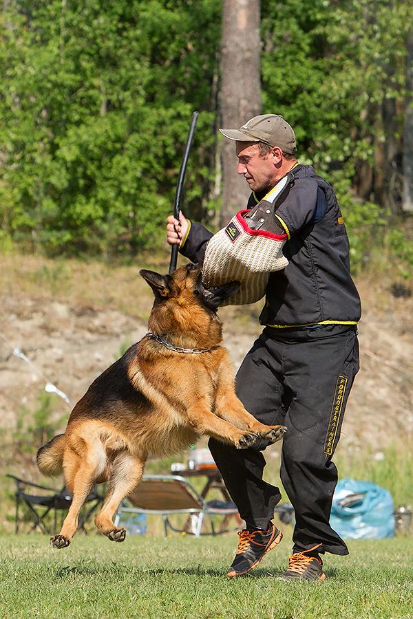 немецкая овчарка фото D1_5015_900 D1_5015_900