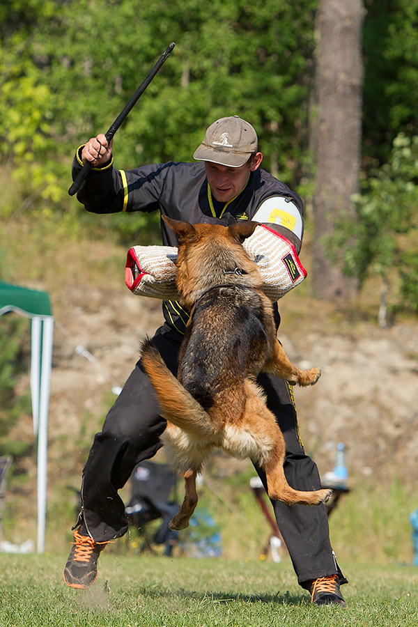 немецкая овчарка фото D1_5225_900 D1_5225_900