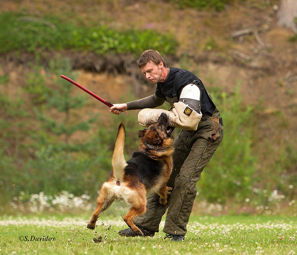 немецкая овчарка фото 1D_0473-1_1000_96 1D_0473-1_1000_96