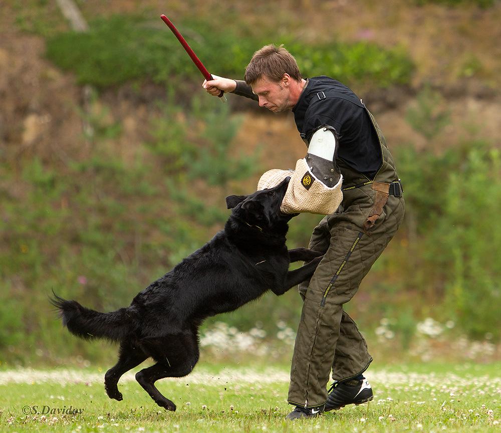 немецкая овчарка фото 1D_0656-1_1000_101 1D_0656-1_1000_101