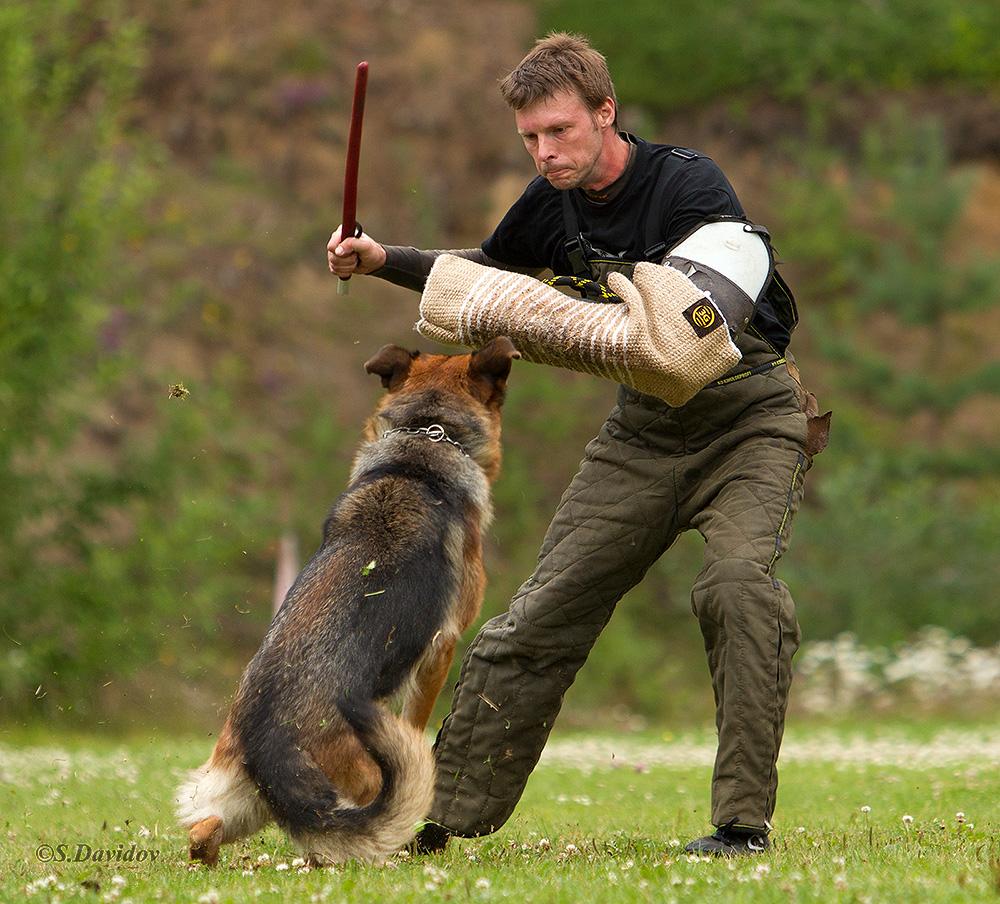 немецкая овчарка фото 1D_0721-1_1000_103 1D_0721-1_1000_103