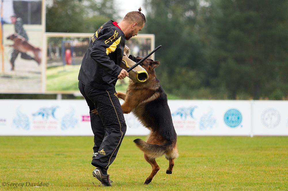 немецкая овчарка фото 1D_3505-1_1000_57 1D_3505-1_1000_57