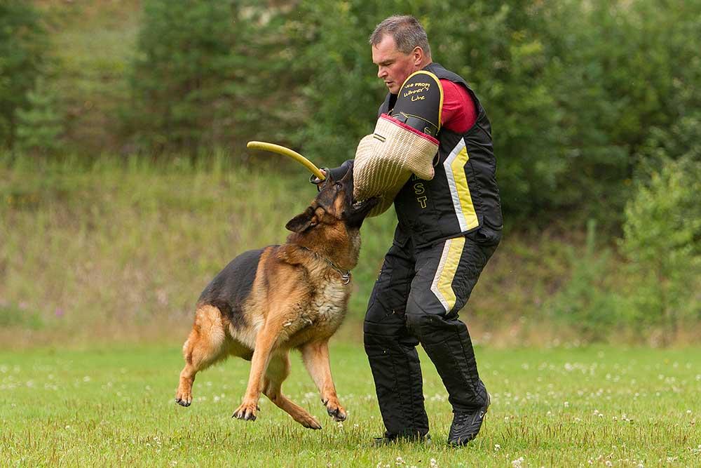 немецкая овчарка фото 1D_9114-1_1000 1D_9114-1_1000