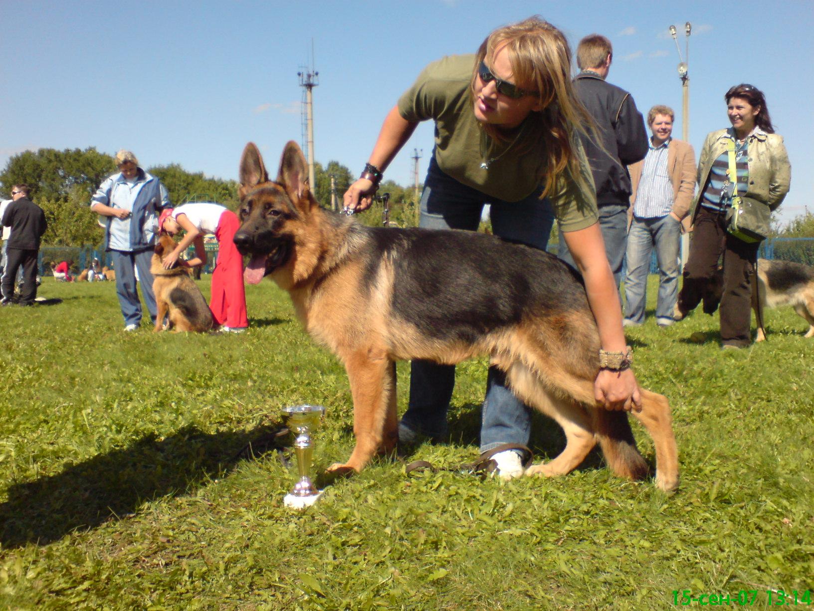 немецкая овчарка 1_-FCI_CACIB_2007_150907_13-14_ 1_-FCI_CACIB_2007_150907_13-14_