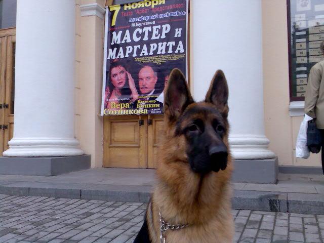 немецкая овчарка Master_i_Margarita_i_251007_08-21_ Master_i_Margarita_i_251007_08-21_