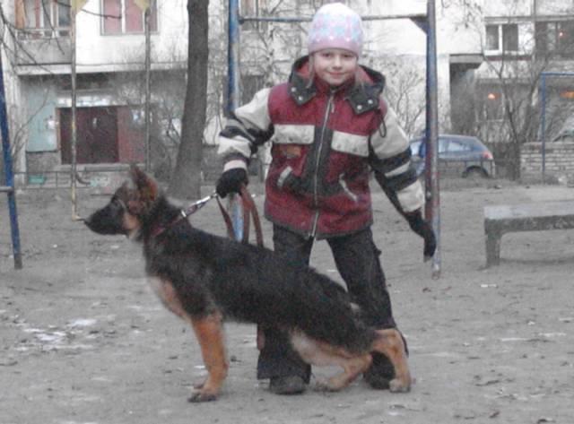 немецкая овчарка фото Джина - 4 мес. 1_