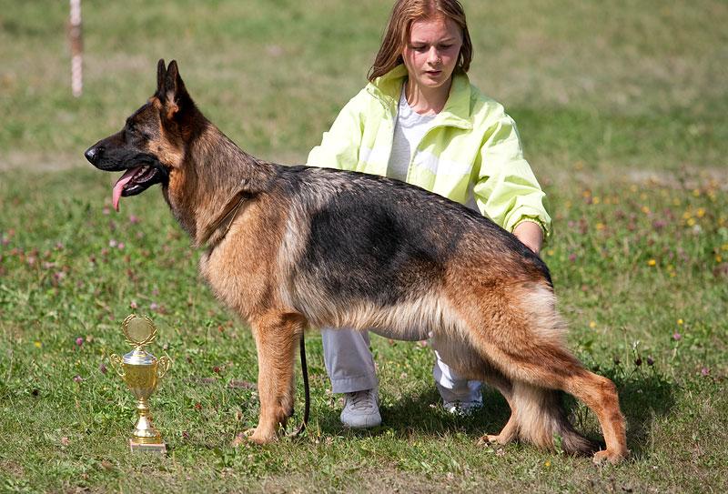 немецкая овчарка r_2009-1276_ r_2009-1276_