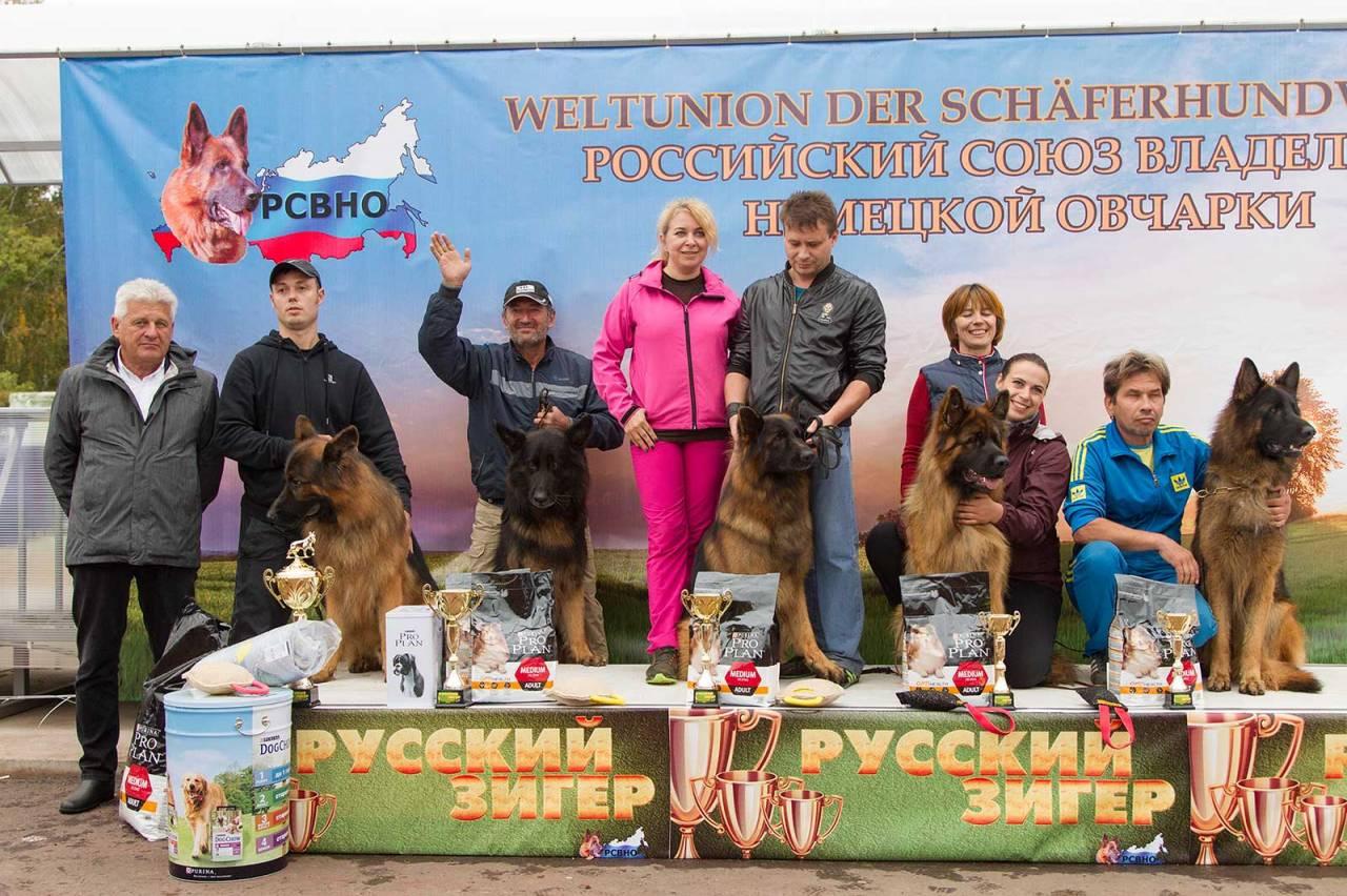 немецкая овчарка фото 1D_7778-1_1600 1D_7778-1_1600